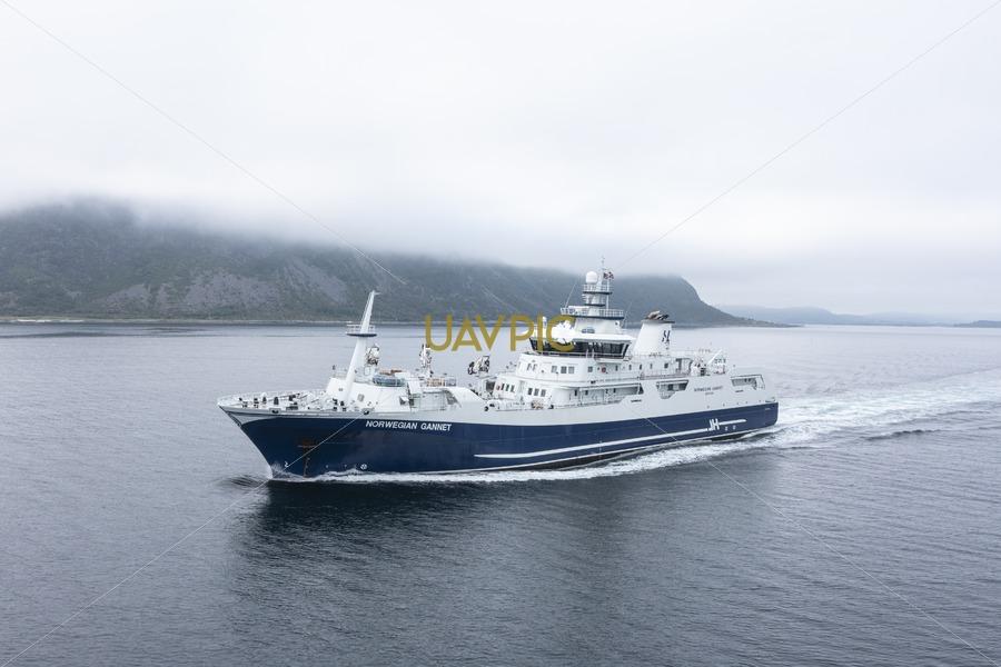 Norwegian Gannet 740.jpg - Uavpic
